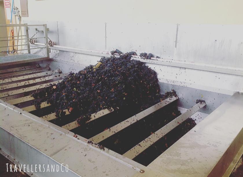 Proceso del vino by TravellersandCo.jpg