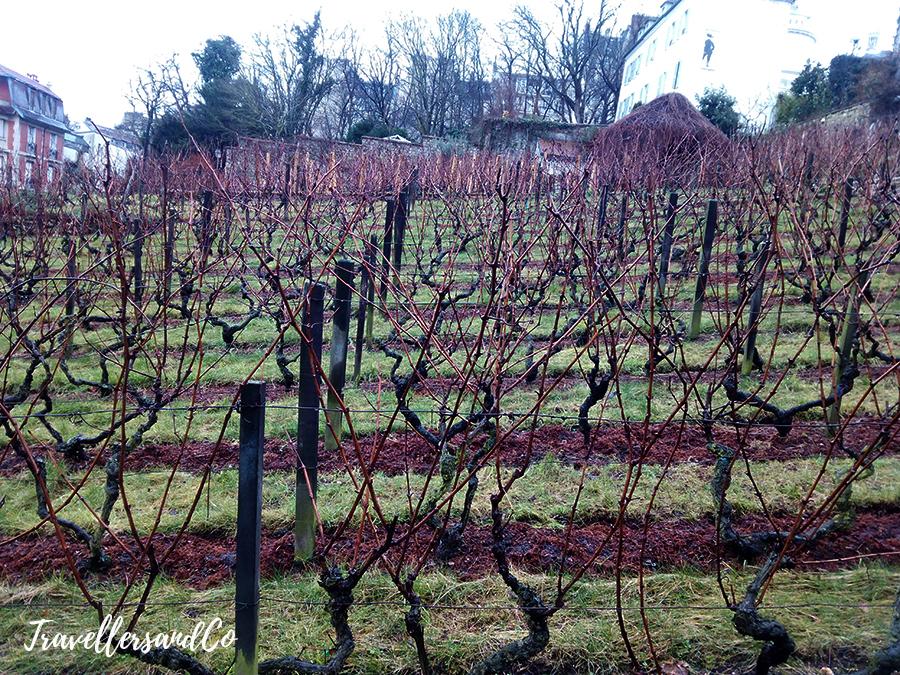 vignes-du-clos-montmartre-paris-sagrado-corazon-travellersandco copia.jpg