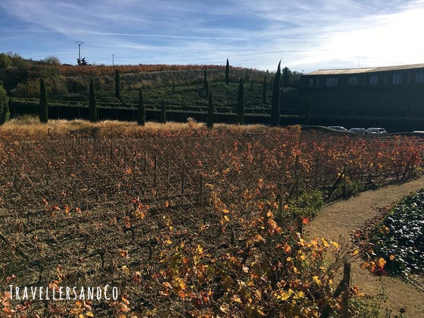 Otoño y viñedos en el Marqués de Riscal by TravellersandCo.jpg