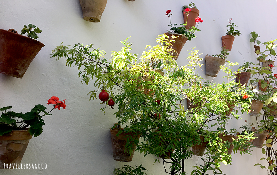 Patios cordobeses by TravellersandCo.jpg